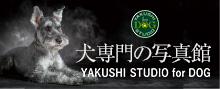 犬専門の写真館 YAKUSHI STUDIO for DOG