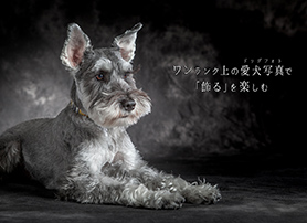 YAKUSHI STUDIO for DOG